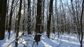 Winter forest with snow and sunlight. Through trees stock footage