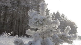 Winter forest in snow stock footage