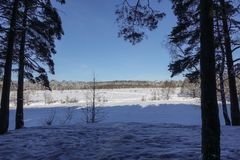 Winter forest in the snow. Sunny frosty day.  royalty free stock photography