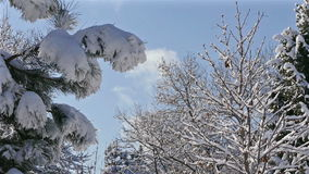 Winter Forest Snow Tree Branch Blue Sky Clouds stock video footage