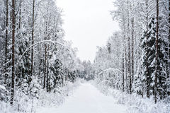 Winter forest snow tree road Royalty Free Stock Photography
