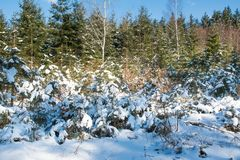 Winter forest snow trees background Royalty Free Stock Images