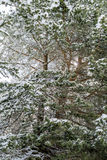 Winter forest with snow on the trees Stock Photo