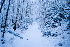 Winter forest with snow Stock Images