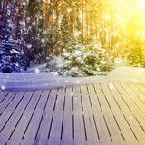 Winter forest with snow Royalty Free Stock Images