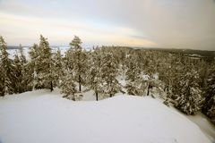Winter forest, snowdrifts and trees, Finland Stock Photo