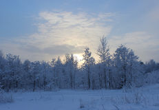 Winter forest after a snowfall on Christmas in the dead of winte Stock Images