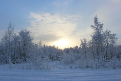 Winter forest after a snowfall on Christmas in the dead of winte Stock Photography