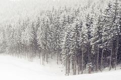 Winter forest snowfall Stock Images