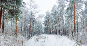 Winter forest during a snowfall Royalty Free Stock Photography