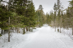 Winter Forest on a Snowing Day. Forest Track covered in snow in Quebec on a freezing snowing day Stock Images