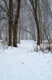 Winter forest snowstorm. Winter forest landscape with snowstorm and clouds Stock Image