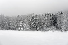 Winter in The Forest. Snowy pine forest on the bank of a frozen lake Royalty Free Stock Photography