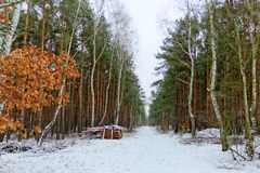 Winter forest. Snowy road in the winter forest and wood stack Royalty Free Stock Image