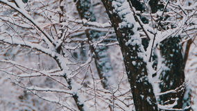 Winter Forest with Snowy Tree stock footage
