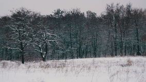 Winter Forest with Snowy Tree stock video