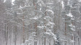 Winter forest. Static view of winter forest stock video footage