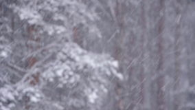 Winter in forest. Static view of winter forest stock video footage