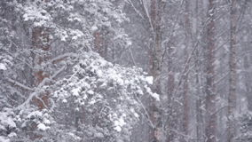 Winter forest. Static view of winter forest stock video