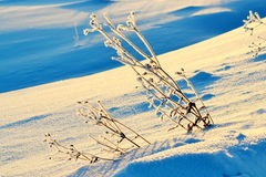 Winter in the forest-steppe. The frosty snow winter came to forest-steppes of Altai Stock Photography