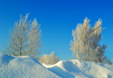 Winter in the forest-steppe. The frosty snow winter came to forest-steppes of Altai Royalty Free Stock Photos