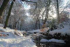 Winter forest with stream Stock Photos