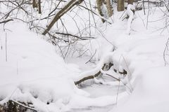 Winter forest stream covered with ice and snow. Winter forest landscape. The silence and the snow Stock Image