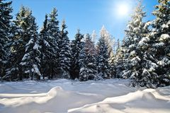 Winter Forest with Sun Stock Image