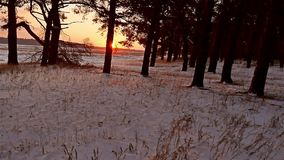 Winter forest and sun landscape. christmas sun tree beautiful winter forest snow a glare sunlight. Winter forest and sun landscape. christmas sun tree beautiful stock footage