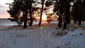 Winter forest and sun landscape. christmas sunlight tree beautiful sun winter forest snow a glare. Winter forest and sun landscape. christmas sunlight tree stock footage