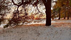 Winter forest and sun landscape. christmas tree beautiful sun winter forest snow a glare sunlight. Winter forest and sun landscape. christmas tree beautiful sun stock footage