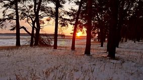 Winter forest and sun landscape. sun christmas tree beautiful winter forest snow a glare sunlight. Winter forest and sun landscape. sun christmas tree beautiful stock video