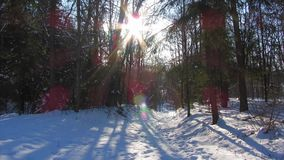 Winter forest and the sun stock footage