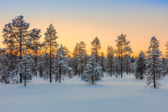 Winter forest at sundown tine, trees and snow Stock Images