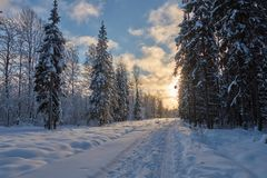 Winter forest at sunny day royalty free stock photos