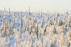 Winter forest on sunny day. Cold winter forest on sunny day royalty free stock photo