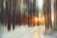winter forest in sunny day Royalty Free Stock Images