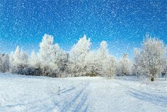 winter forest on sunny day Royalty Free Stock Photography