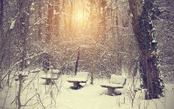 Winter forest on a sunny day Royalty Free Stock Photography