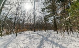 In winter forest. royalty free stock photos