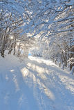 Winter forest at sunrise Stock Photography