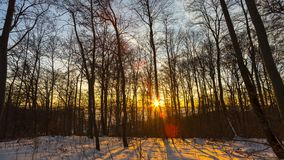 Winter forest sunrise. Ethereally beautiful early morning sunrise time lapse shot in a romantic, snow covered winter forest stock video