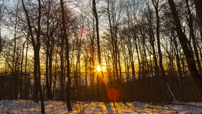 Winter forest sunrise. Ethereally beautiful early morning sunrise time lapse shot in a romantic, snow covered winter forest stock video footage