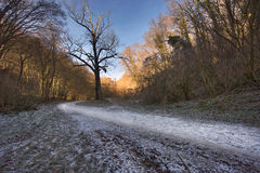 Winter forest sunrise. Road through scenic forest. In National Park Fruska Gora, Serbia Stock Photos