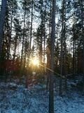 Winter forest. Sunrise in snowy forest Stock Images