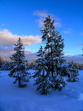 Winter Forest Sunset. Photo of a Winter Forest Sunset or Sunrise with Snow in the Foreground Royalty Free Stock Photo