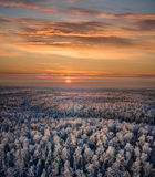 Winter forest of sunset Stock Photos