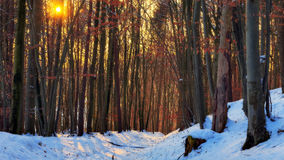 Winter Forest Sunset Stock Photo