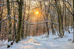 Winter Forest Sunset Royalty Free Stock Images