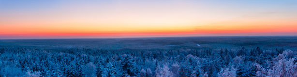Winter forest and sunset. colorful panoramic view Royalty Free Stock Images